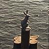 """Экскурсия """"Развод мостов на теплоходе"""". Памятник зайцу."""